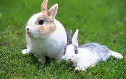 imiona dla dziewcząt z królików