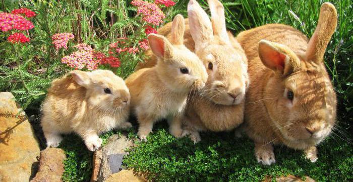 imiona dla chłopców-królików