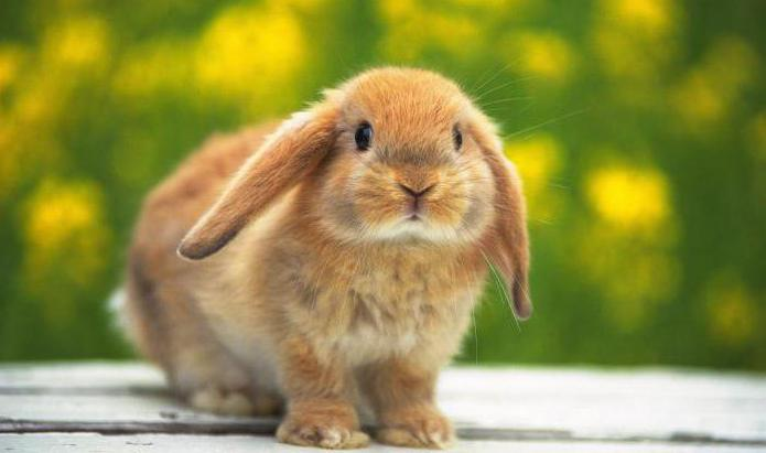 piękne imiona dla królików