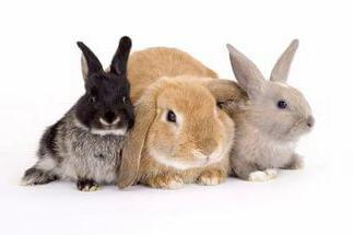jak króliki nazywają się imionami