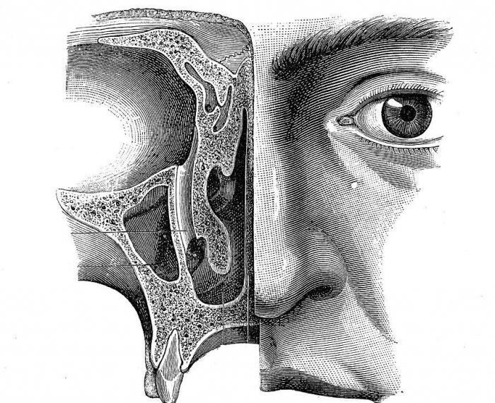 структура и функция на носната кухина
