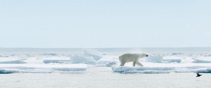 Parco nazionale artico russo in Russia