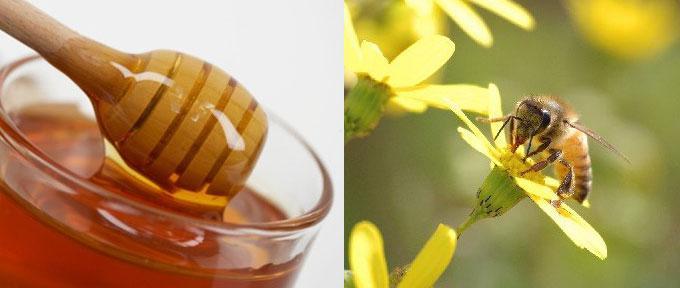 цвят мед