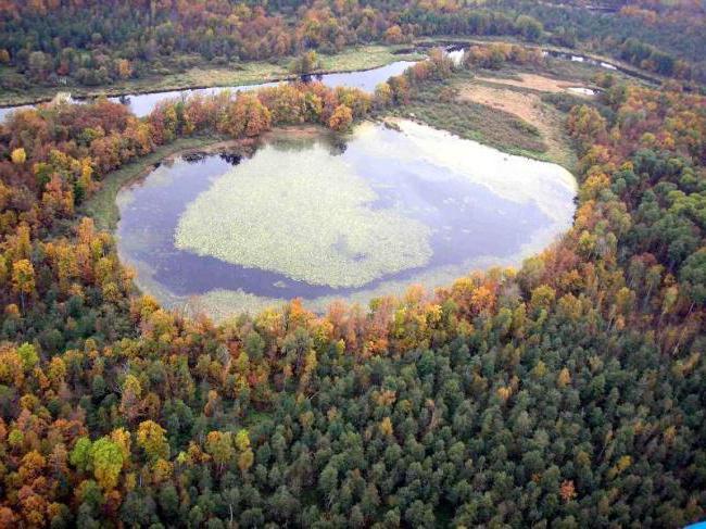 Capsino del lago