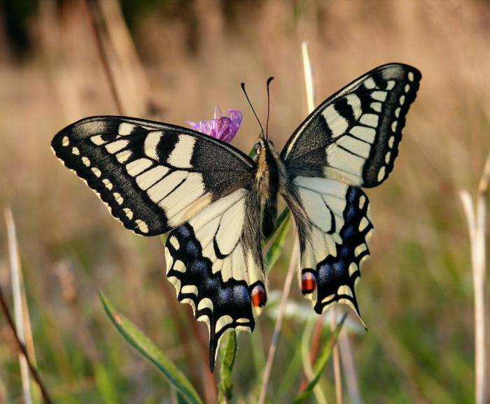 Farfalla farfalla