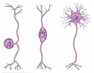 živčanog tkiva