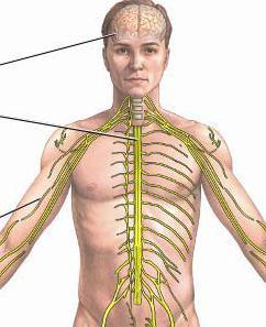 struktura živčanog tkiva