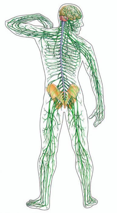 svojstva živčanog tkiva