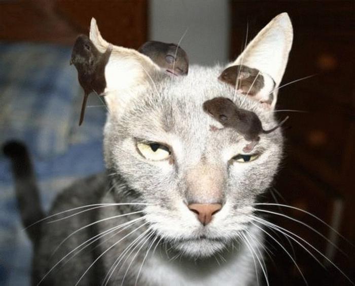 przezwiska koty