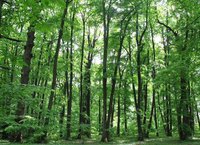 risorse naturali non rinnovabili