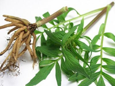 sedativi a base di erbe