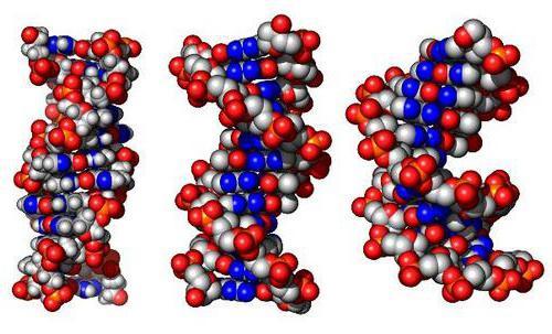 нуклеинске киселине