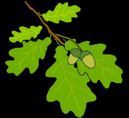 Дъбово листа