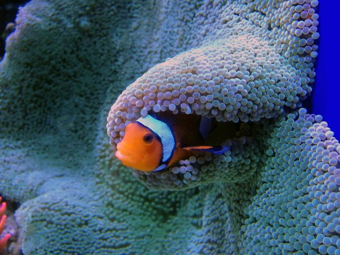 recensioni di aquarium in st petersburg