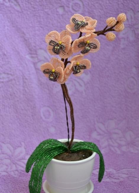 majstorski razred zrna orhideje