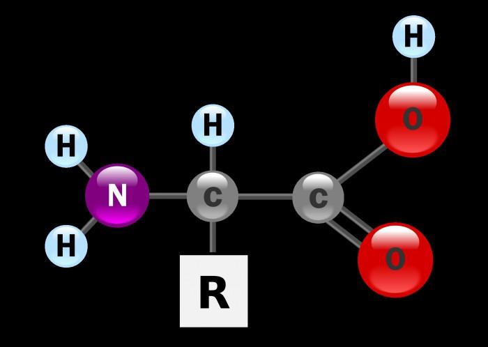 organske in anorganske snovi