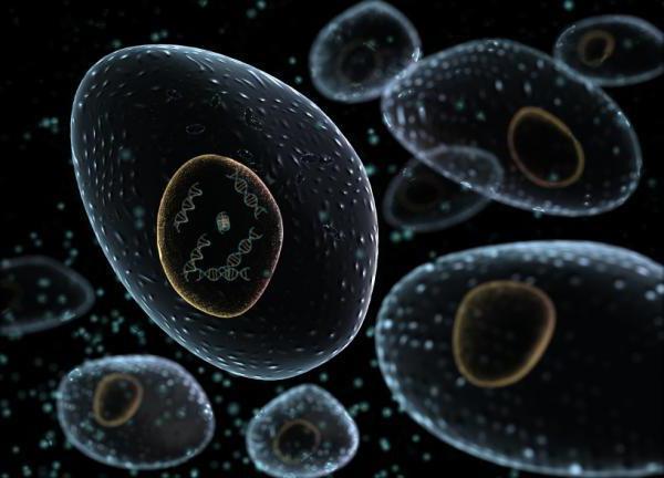 anorganske celične snovi