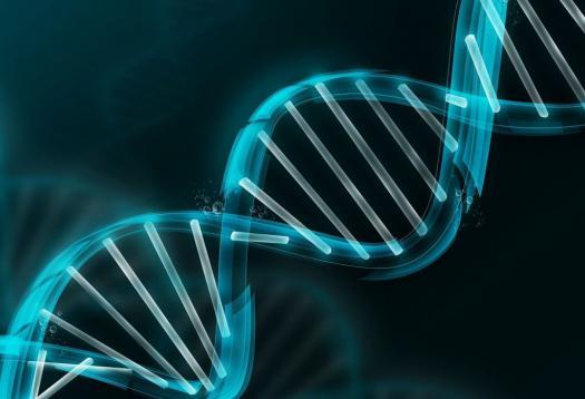 Teorija organskih spojin