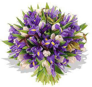 svadbeni buket tulipani