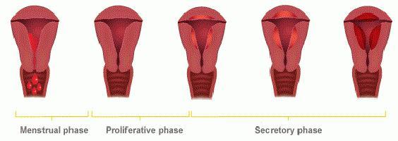 dolore all'inguine a destra nelle donne