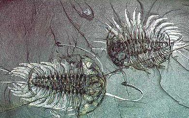 Aromorfosi dell'era paleozoica
