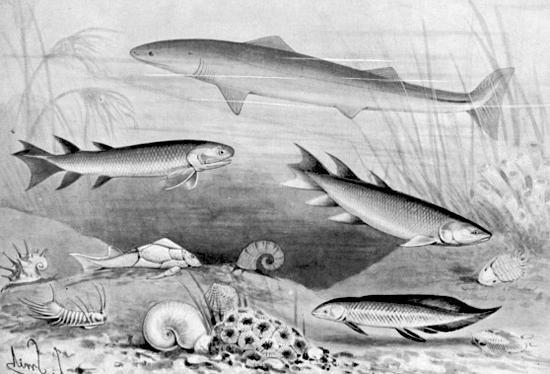 Piante e animali dell'era paleozoica