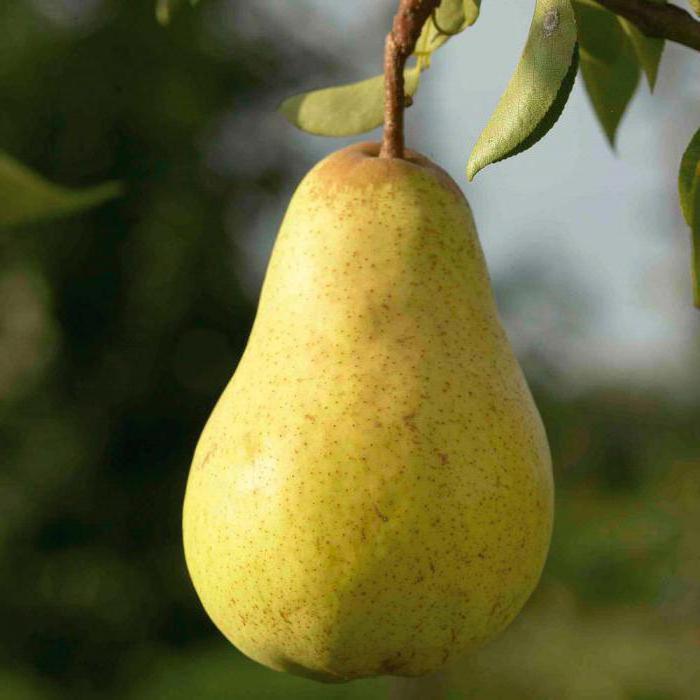 Descrizione di Pear Duchess