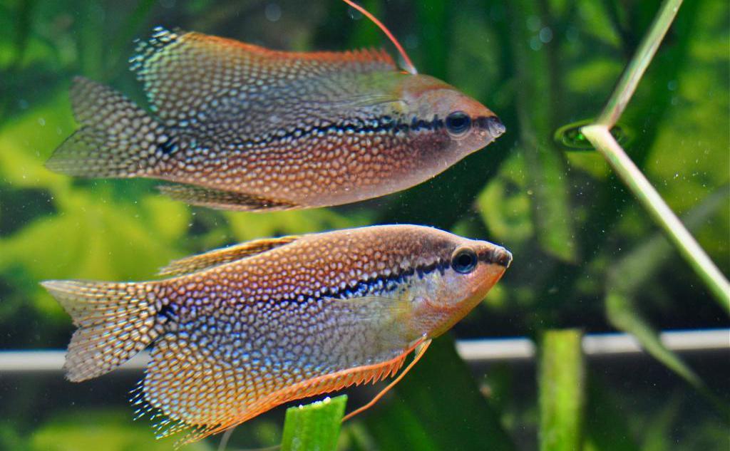 Mjesto za upoznavanje sa srebrnom ribom