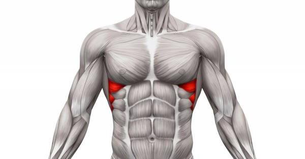 muscolo pettorale inferiore
