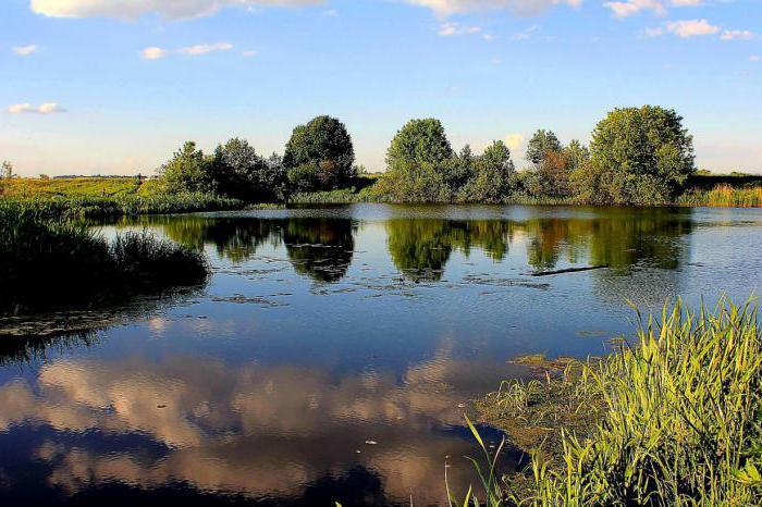 kakšne ribe najdemo v reki pehorki
