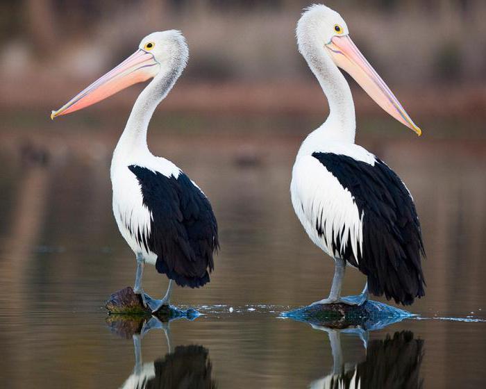 Polykat velké ptáky