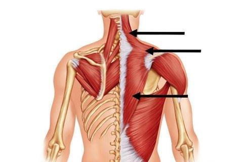 как да изпомпва трапецовидния мускул