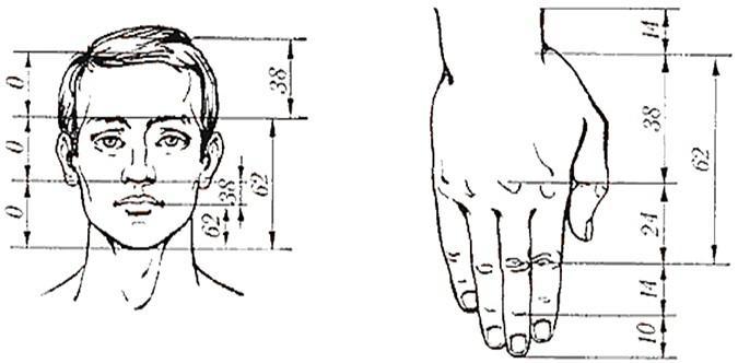 podíl lidského těla