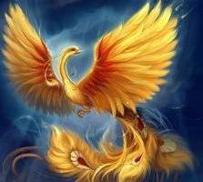 phoenix bird foto