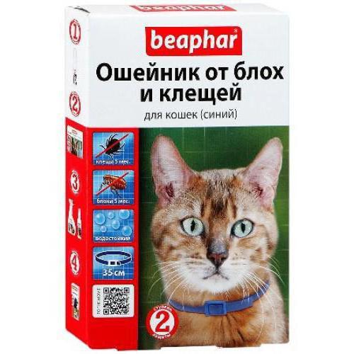 periodo di incubazione della piroplasmosi nei gatti
