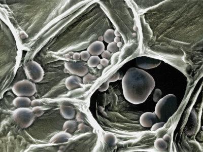 Struttura del citoplasma