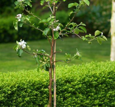 piantare meli in autunno