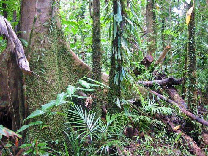 Екваторијална шумска флора
