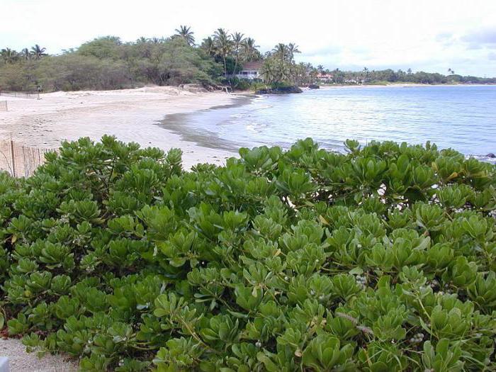 Које биљке расту у екваторијалним шумама