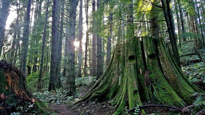 Екваторијалне шуме Азије