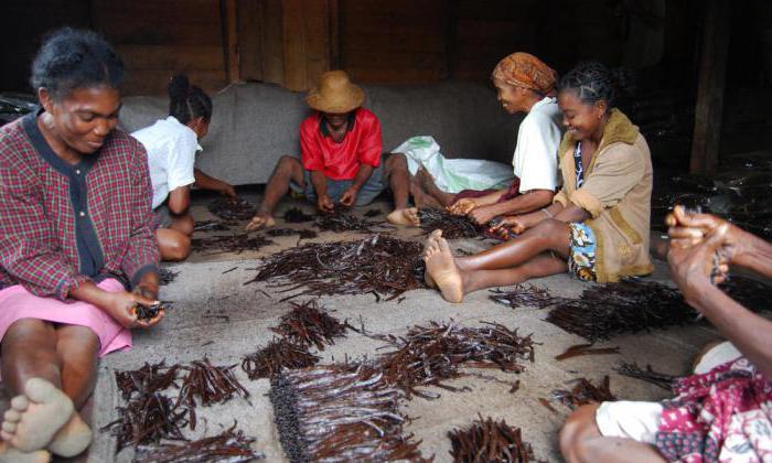 indigeni del madagascar