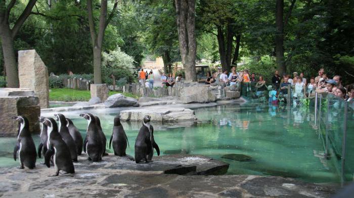 зоологическата градина в Прага как да се получи