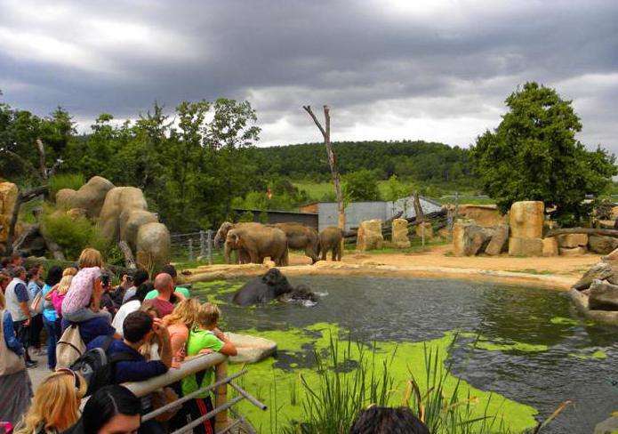 Как да стигнем до зоологическата градина в Прага