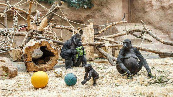 зоопарк в Прага ревюта