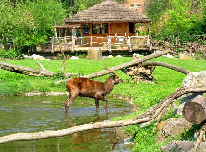 как прави зоологическата градина в Прага