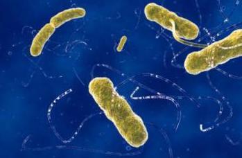 farmaci prebiotici