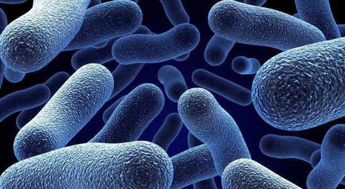 класификација микроорганизама