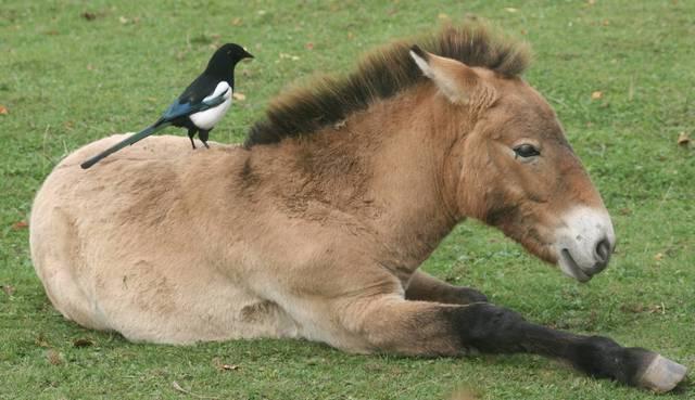 Descrizione del cavallo