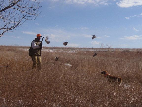 Lov na prepelice u regiji Rostov