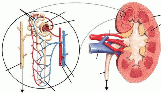 ребро тест
